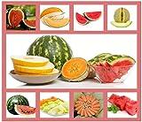 Heirloom Fruit Seeds- Non Hybrid-...