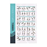 FitMate Dumbbell Workout Exercise Poster - Workout Routine with Free Weights, Home Gym Decor, Room Guide (16.5 x 25 Inch)