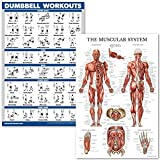 QuickFit Dumbell Workouts and Muscular System Anatomy Poster Set - Laminated 2 Chart Set - Dumbbell Exercise Routine & Muscle Anatomy Diagram (Laminated, 18' x 27')