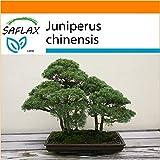 SAFLAX - Garden in the Bag - Enebro de la China - 30 semillas - Con sustrato de cultivo en un sacchetto rigido fcil de manejar. - Juniperus chinensis