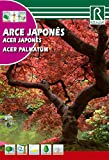 Semilla arce japons (acer palmatum) - Rocalba