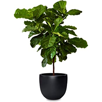 Amazon Com Omysa Large Plant Pot 15 Inch Fiberstone Indoor Outdoor Planter Pots With Drainage Matte Black Modern And Round Shape Tree Plant Holder Flower Container