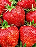 Oguine 100Pcs Mix Giant Everbearing Strawberry Seeds, Sweet Strawberry/Organic Garden Strawberry Fruit Seeds for Home Garden Planting