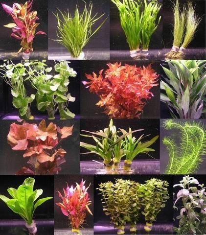 10 Bunde mit über 80 Aquarium-Pflanzen - großes buntes Sortiment für EIN 100 Liter Aquarium, Wasserpflanzen für Vorne, Mitte und Hinten