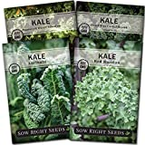 Sow Right Seeds - Kale Seed Collection for Planting - Non-GMO Heirloom Packet with Instructions to Plant and Grow a Home Vegetable Garden, Great Gardening Gift
