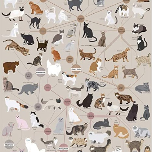 Cats Infographic Poster