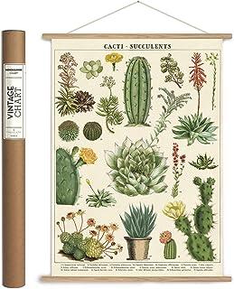 Cavallini Papers & Co., Inc. VPK/SUC Vintage Succulents Vintage Wall Décor