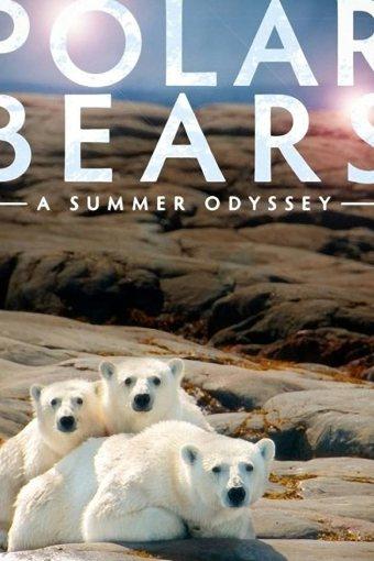 Ursos Polares – Uma Odisseia No Verão Dublado Online