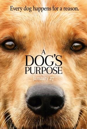 Quatro Vidas de um Cachorro Dublado Online