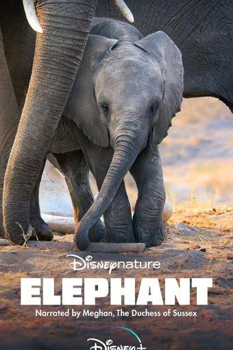 Elefante Legendado Online
