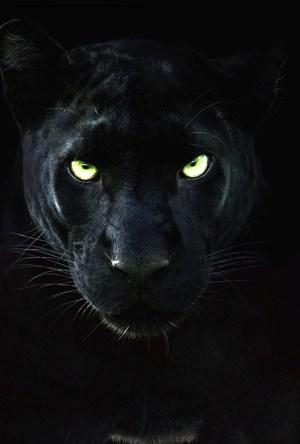 Pantera Negra: O Reino Selvagem Dublado Online
