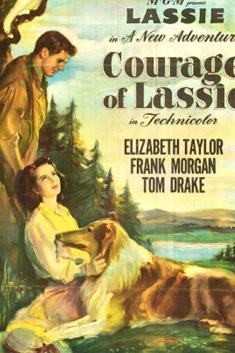 A Coragem de Lassie Dublado Online