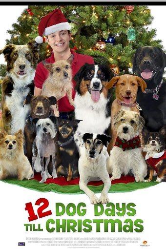 12 Dias de Cão Dublado Online