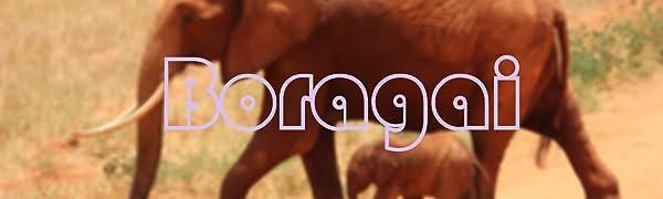 Boragai Brand Promotion