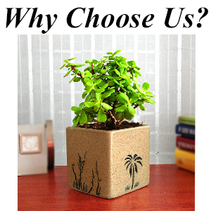 Square Pots, Plants, Fresh, Live, Natural, Indoor, Gift, Houseplants, Air Purifying, Money Plant