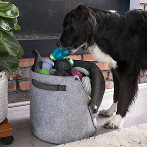 barkbox dog bin easy access