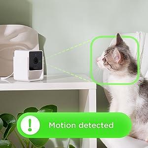 Motion detection surveillance