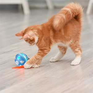 cat moving toy
