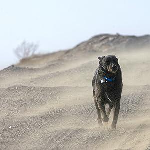 NaviTagi Adventure Dog ID Tag