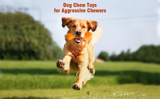 Dog Toys for Aggressive Chewers