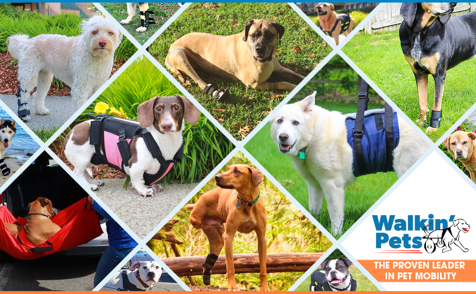 Collage of dogs wearing Walkin' Pets products