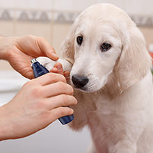 pet nail grinder for dogs