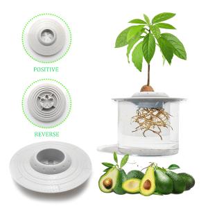 avocado tree1