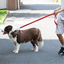 long leash for large dogs,50 foot dog leash,dog leashes,extra long leash,long leash for backyard