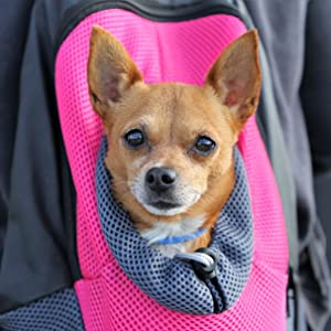 pet carrier backpak small dog