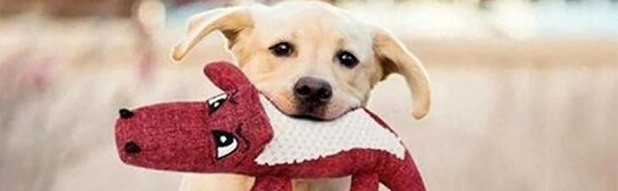 Squeaky Soft dog toys