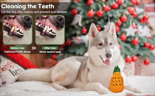 dental dog toy