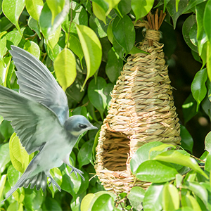 Ideal Bird Gift