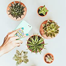 cacti, mobile, cell, phone holder, light blue, re-attachable, collapsible