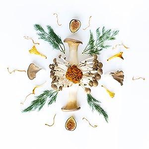 mushroom mandala