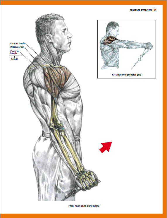 The Strength Training Anatomy Workout V 2 Pdf | Yourviewsite.co
