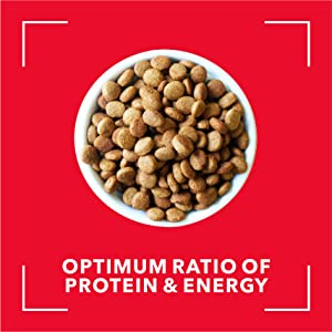 The optimum ratio of protein and energy sustains the energy level for active performance.
