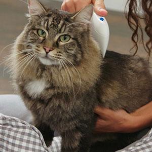Peine de pulgas doctor pulgas en gato