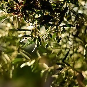 olive, natto, vegan lichen, organic, non-gmo, natural, d3, k2, fermented, vegan