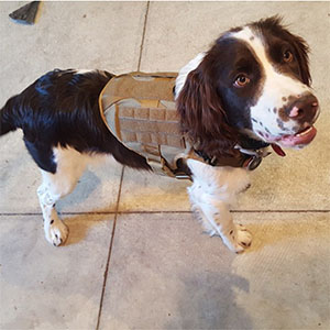 dog harness velcro patch