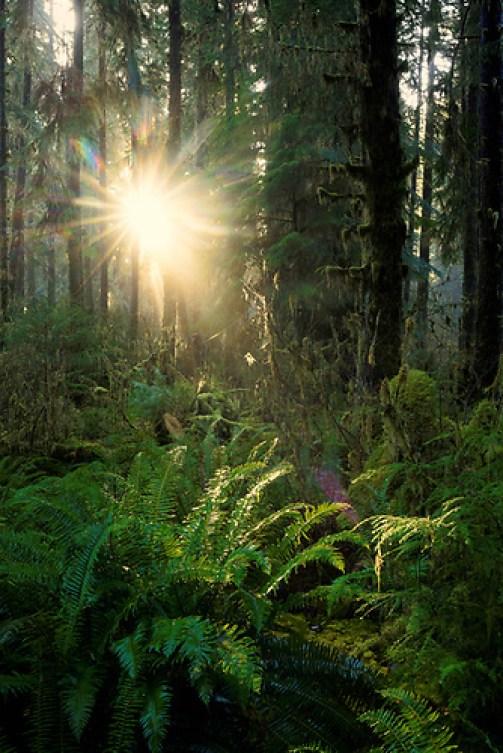 Queets River rainforest