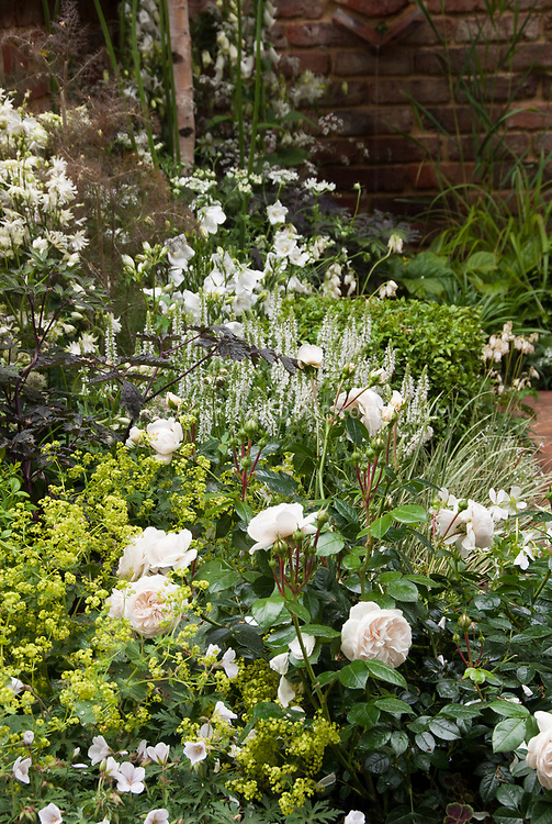 white flower garden plant flower stock photography gardenphotos com