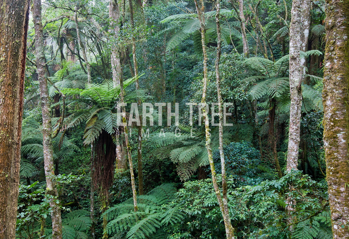 Huge collection, amazing choice, 100+ million high quality, affordable rf and rm images. Equatorial Forest