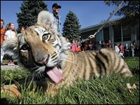 Obie_2.jpg Obie XXXXII puts on a happy face for the students of Smith Elementary School as the Obie Crew makes stops at all the elementary school during Massillon McKinley Week.