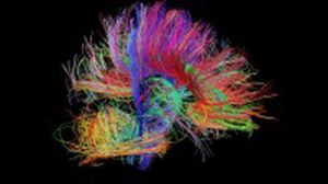 How the Brain's Wiring Forms Thoughts and Emotions