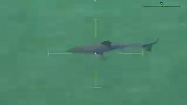 Great White Shark Spotted off Beach in Massachusetts