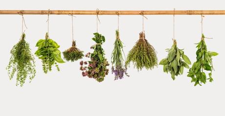 Aplicaciones de las plantas medicinales
