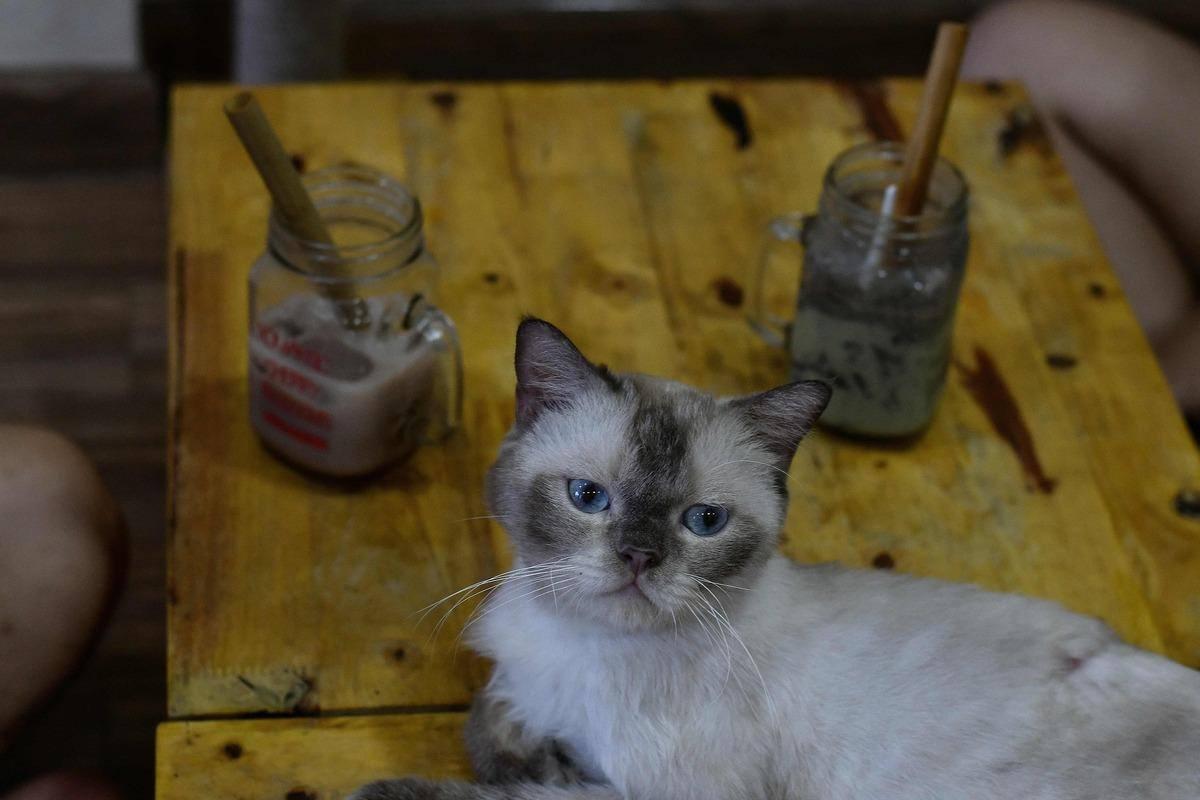 [EN IMAGES] Au Vietnam, un café recueille des chats à adopter