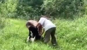 Les Etchemins: la DPJ mêlée à une enquête pour cruauté animale