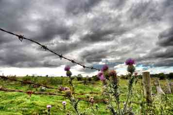 Thistles and impeding weather