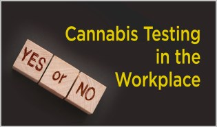 Cannabis Testing in the Workplace